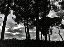 Árboles silueteados Imagenes de archivo