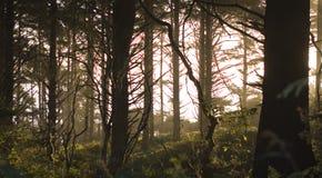 Árboles silueteados asoleados Imágenes de archivo libres de regalías