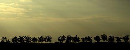 árboles silueteados contra el cielo Imágenes de archivo libres de regalías