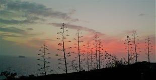 Árboles silueteados contra el mar y la puesta del sol Fotos de archivo libres de regalías