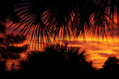 Árboles silueteados contra la puesta del sol Foto de archivo libre de regalías