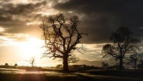 Árboles silueteados contra puesta del sol Foto de archivo libre de regalías