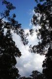 Árboles silueteados contra un cielo azul Foto de archivo