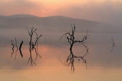 Árboles silueteados en agua en el amanecer Foto de archivo