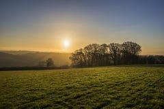 Árboles silueteados en la salida del sol en campos, Cornualles, Reino Unido Imágenes de archivo libres de regalías