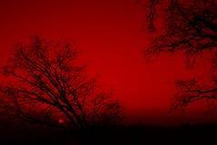 Árboles silueteados en una puesta del sol roja Imagenes de archivo