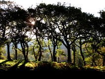 Árboles silueteados en verano tardío Foto de archivo libre de regalías