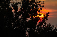 Árboles silueteados que se colocan antes del sol poniente Imagen de archivo