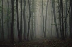 Árboles simétricos en bosque misterioso el la noche de Halloween Fotografía de archivo
