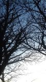 Árboles simples Foto de archivo libre de regalías