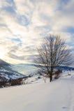 Árboles sin las hojas en el frente de la nieve Vista de las montañas del invierno Fotos de archivo libres de regalías