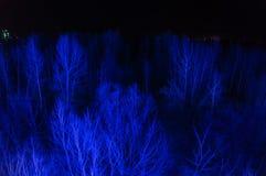 Árboles sin las hojas en la noche Imagen de archivo libre de regalías