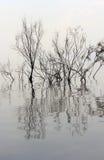 Árboles sin las hojas reflejadas en el agua Foto de archivo libre de regalías