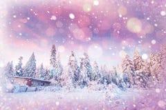 Árboles sitiados por la nieve, fondo del paisaje del invierno del bokeh con el snowflak Imagen de archivo