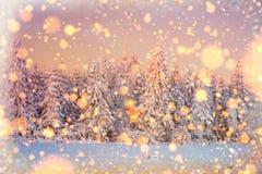 Árboles sitiados por la nieve, fondo del paisaje del invierno del bokeh con el snowflak Foto de archivo