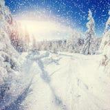 Árboles sitiados por la nieve, fondo del paisaje del invierno del bokeh con el snowflak Fotos de archivo libres de regalías