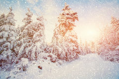 Árboles sitiados por la nieve, fondo del paisaje del invierno del bokeh con el snowflak Fotografía de archivo