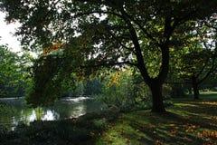 Árboles sobre el lago en caída Foto de archivo libre de regalías
