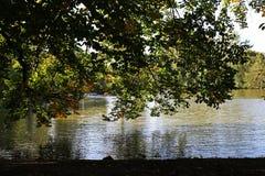 Árboles sobre el lago en caída Imagen de archivo