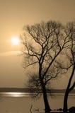 Árboles solitarios Fotos de archivo libres de regalías