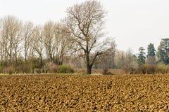 Árboles solitarios en campo arado en Buckinghamshire Imagen de archivo libre de regalías