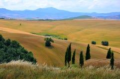 Árboles solitarios en Toscana, Italia fotos de archivo libres de regalías