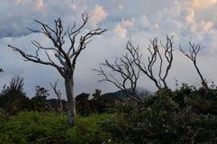 Árboles solos Fotografía de archivo