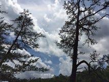 Árboles solos Imagen de archivo libre de regalías