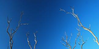 Árboles solos del otoño Imagen de archivo