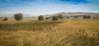 Árboles solos en un paisaje australiano solitario Fotografía de archivo