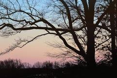 Árboles sombríos en puesta del sol Fotografía de archivo libre de regalías