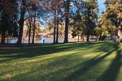 Árboles, sombras y agua en parque urbano Imagenes de archivo