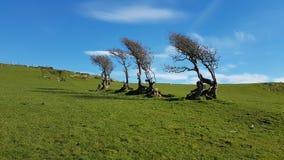 Árboles soplados viento Fotos de archivo libres de regalías