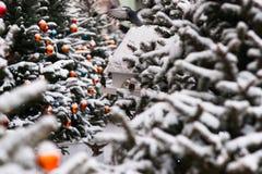Árboles spruce nevados adornados para la Navidad Imagen de archivo libre de regalías