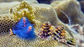 Árboles subacuáticos del Año Nuevo Foto de archivo