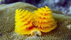 Árboles subacuáticos del Año Nuevo fotografía de archivo libre de regalías