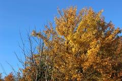Árboles superiores del otoño del paisaje Imagen de archivo libre de regalías