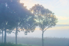 Árboles teniendo en cuenta salida del sol Foto de archivo