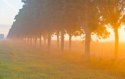 Árboles teniendo en cuenta salida del sol Imagen de archivo libre de regalías