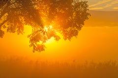 Árboles teniendo en cuenta salida del sol Fotos de archivo libres de regalías