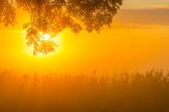 Árboles teniendo en cuenta salida del sol Imágenes de archivo libres de regalías
