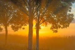 Árboles teniendo en cuenta salida del sol Fotos de archivo