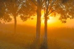 Árboles teniendo en cuenta salida del sol Fotografía de archivo