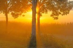 Árboles teniendo en cuenta salida del sol Foto de archivo libre de regalías