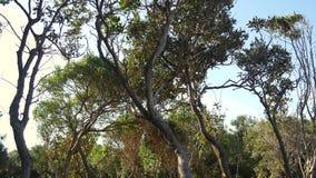 Árboles torcidos en las flores y los árboles del bosque almacen de metraje de vídeo