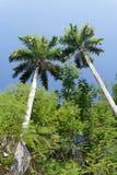 Árboles tropicales imagenes de archivo