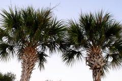 Árboles tropicales de la palma y de coco contra el cielo azul hermoso en th Fotos de archivo