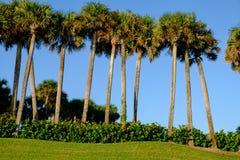 Árboles tropicales de la palma y de coco contra el cielo azul hermoso en th Imágenes de archivo libres de regalías