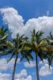 Árboles tropicales de la palma y de coco contra el cielo azul hermoso en th Fotos de archivo libres de regalías