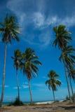 Árboles tropicales de la playa y de coco imágenes de archivo libres de regalías